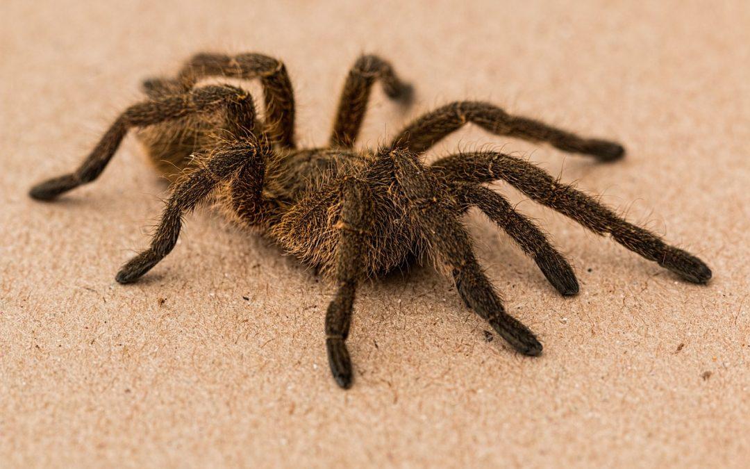 Spider Phobia